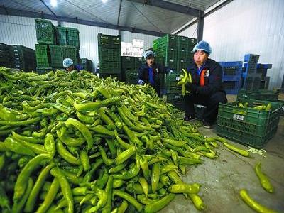 优质的蔬菜配送-选专业的蔬菜配送服务就找青云谱区长城蔬菜配送中心