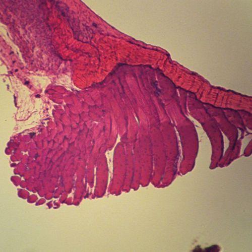 生物切片厂家推荐 实惠的病理学生物切片,就在红树林教学仪器