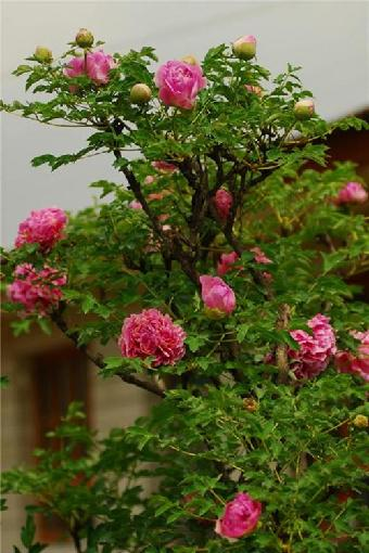 臨洮花卉經銷商 購買花卉就選臨洮綠洲花卉種植