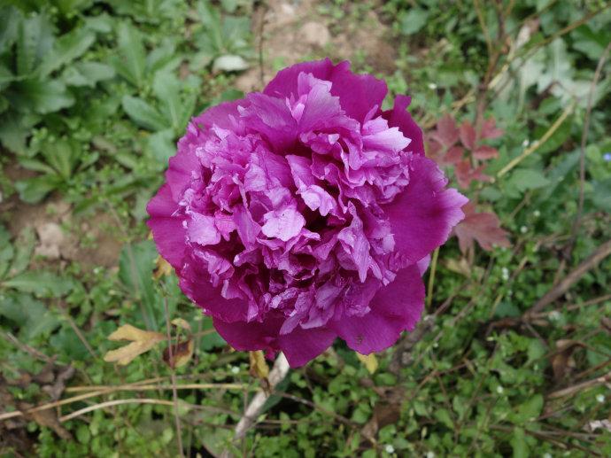 临洮花卉-质量好的花卉出售