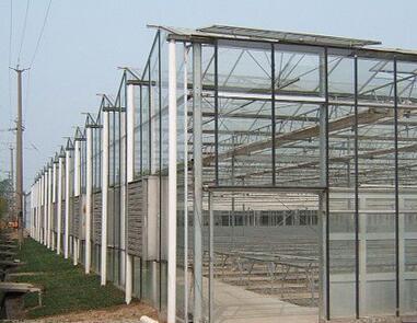 内蒙温室连栋大棚建设 内蒙施工现场 施工案例佰辰温室材料公司