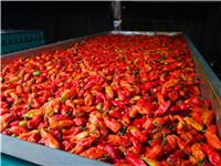 选购耐用的辣椒烘干机就选杭海机械-辣椒烘干机生产厂家