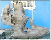 庭院石廠家,高性價庭院石國旺石材經營部供應