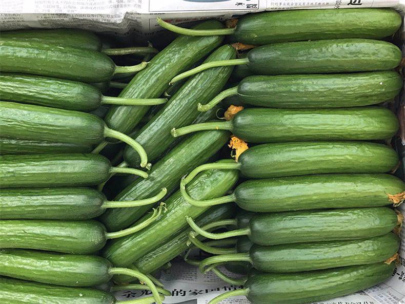 【誰知道???】無刺小黃瓜【黃瓜】收購價格——東華