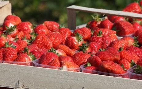 臨沂哪裏有供應價格優惠的草莓,速凍菠蘿批發