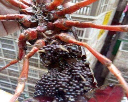 连云港可靠的小龙虾种苗供应商_大兴小龙虾种苗价格行情