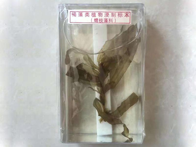 鄂州植物浸渍标本价格_新乡物超所值的植物浸渍标本推荐
