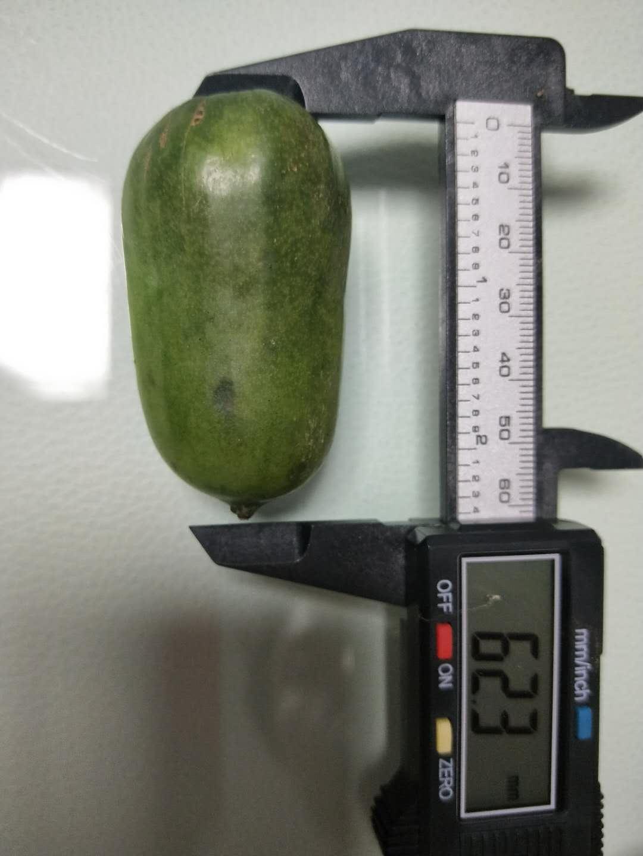 通化軟棗獼猴桃一年苗哪家好-軟棗子苗