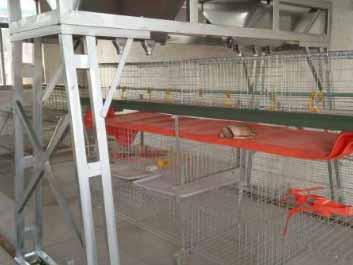蛋鸡笼养系统|划算的喂料系统当选金牧阳机械