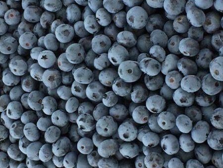 藍莓批發市場_沈陽口碑好的藍莓經銷商