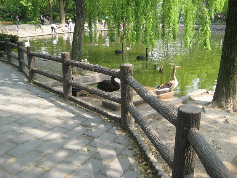 山陽仿石護欄廠家-商洛地區實惠的商洛仿木欄桿