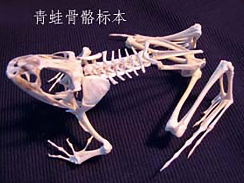 新乡哪里有供应高性价动物标本,动物标本厂家