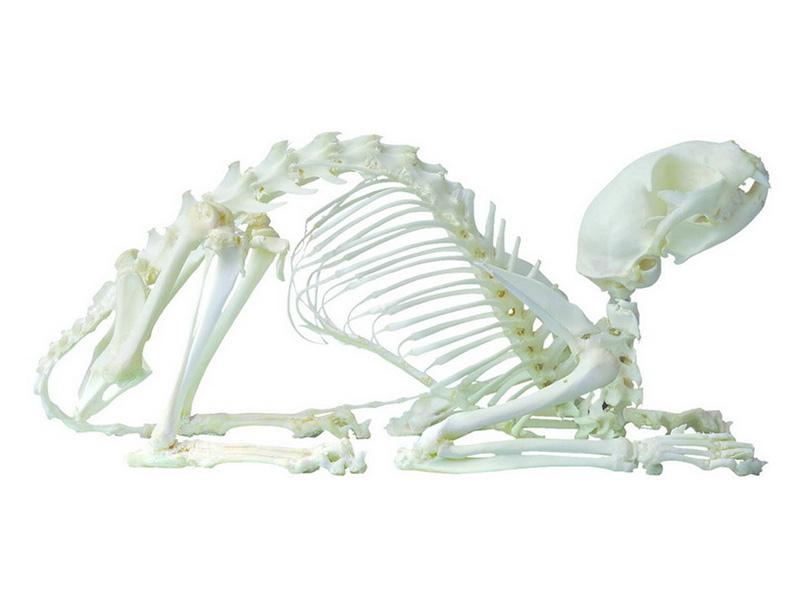 出售河南高质量的动物标本-北京动物塑化标本