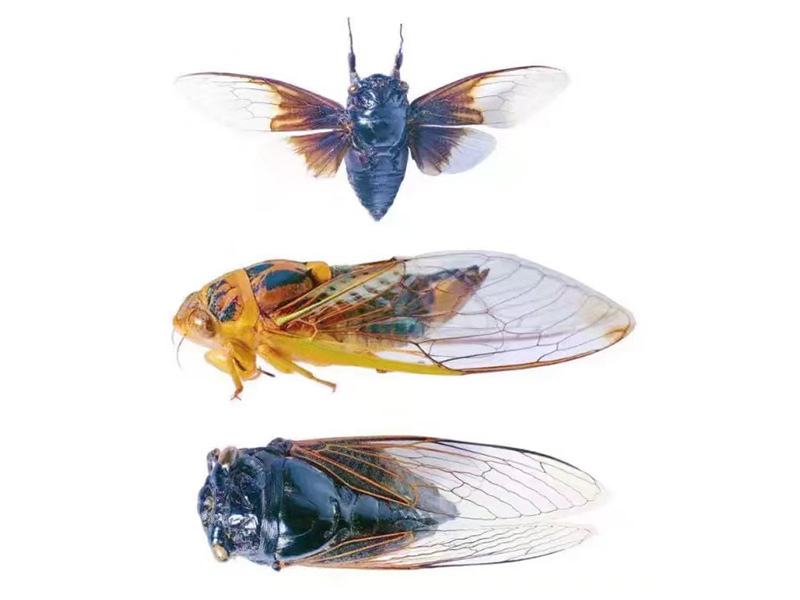 新乡哪里可以买到性价比高的昆虫标本,郑州昆虫标本厂家