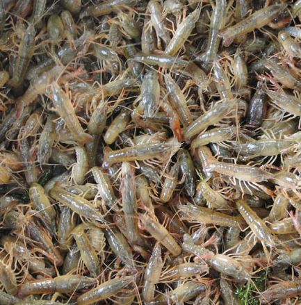 龙虾养殖场哪家口碑好