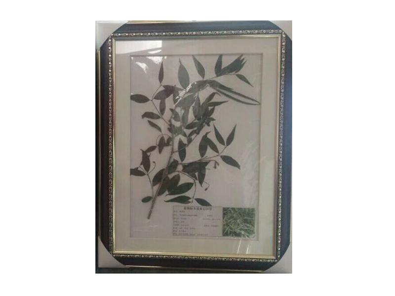 新乡高质量的腊叶标本哪里买_湖州植物蜡叶标本价格