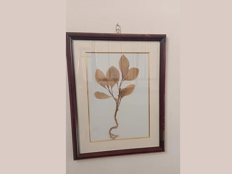 巴中植物蜡叶标本价格_峰达教学设备批发腊叶标本