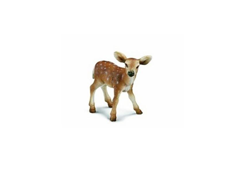 【荐】河南质量好的仿真标本提供商_广州动物仿真标本厂家
