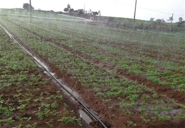 潍坊可靠的喷灌带供应商|喷灌带多少钱