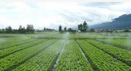 陇南微喷带_宁夏至润嘉禾节水设备品质好的甘肃微喷带出售