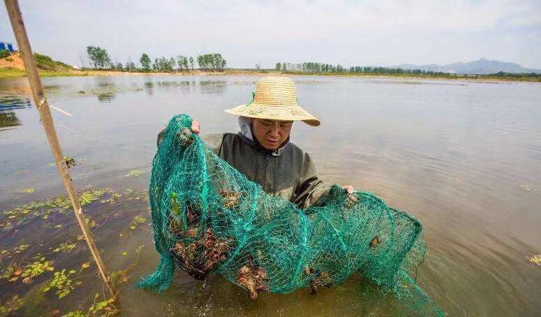阳江购买小龙虾如何去饲养-哪里有提供口碑好的龙虾幼苗