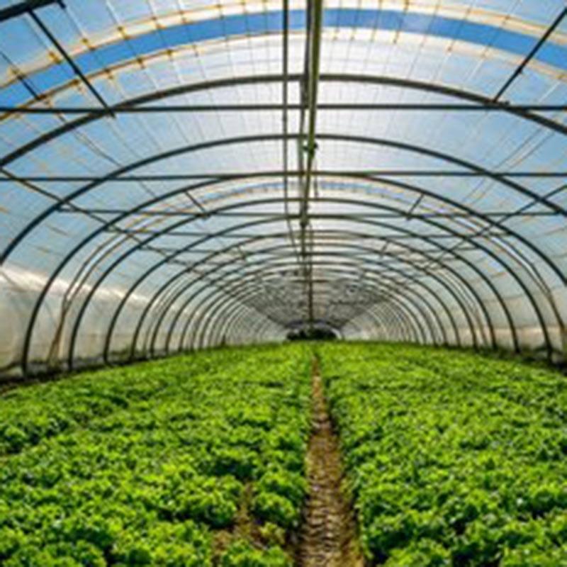 花卉溫室大棚建造廠家-花卉溫室大棚建造