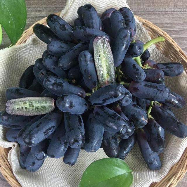 葫芦岛甜蜜蓝宝石葡萄苗|甜蜜蓝宝石葡萄苗哪家买实惠