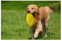 阿坝划算的训犬基地|想买实惠的小型宠物,就到小家伙宠物服务