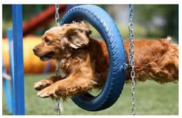专业的宠物培训品牌|大量供应物超所值的小型宠物