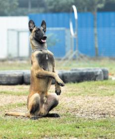 专业的宠物培训种类齐全-四川哪里供应的小型宠物价格优惠