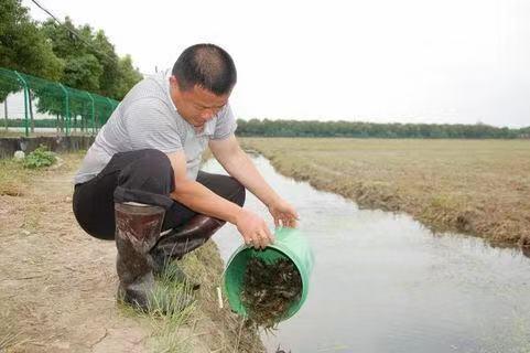 优惠的龙虾种苗价位|泰安热销龙虾种苗批发