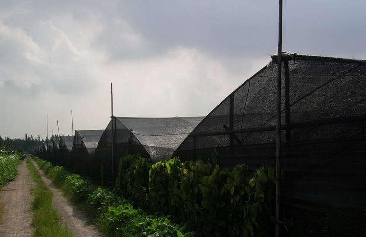 甘肃遮阳网-甘肃哪里可以买到价格适中的遮阳网