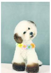宠物美容价格|服务质量好的宠物美容报价