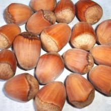 大量的榛子树 平欧榛子的批发价格是多少