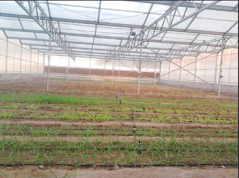 大棚水肥一体化
