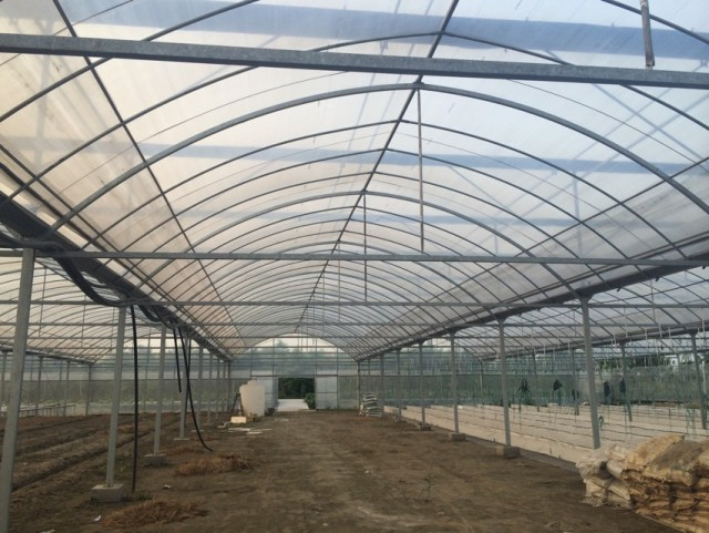 哪里有蔬菜大棚_高质量的大棚钢管建设