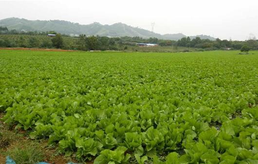 南宁生物有机肥-广西有品质的生物有机肥生产基地