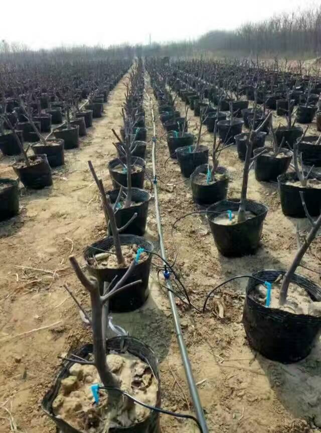 湖南微喷头-河北润田节水设备提供品牌好的喷灌带