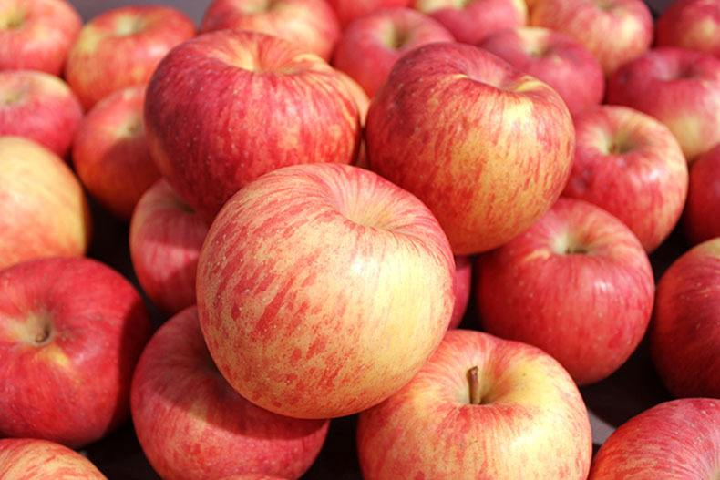 贵诚寒富苹果 赤峰地区哪里有卖优质宁城苹果