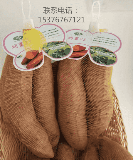 可信赖的烟薯25经销商推荐|新型的烟薯25