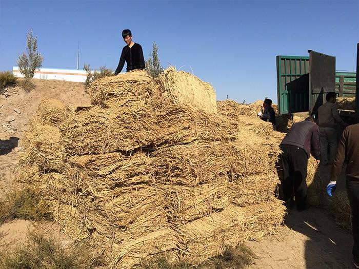 喀什草簾供應商-寧夏德琴農業出售劃算的新疆草簾