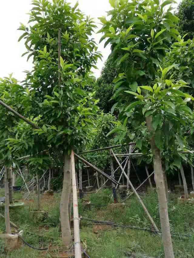 鸿图园林公司供应信誉好的园林绿化 ——可靠的园林绿化