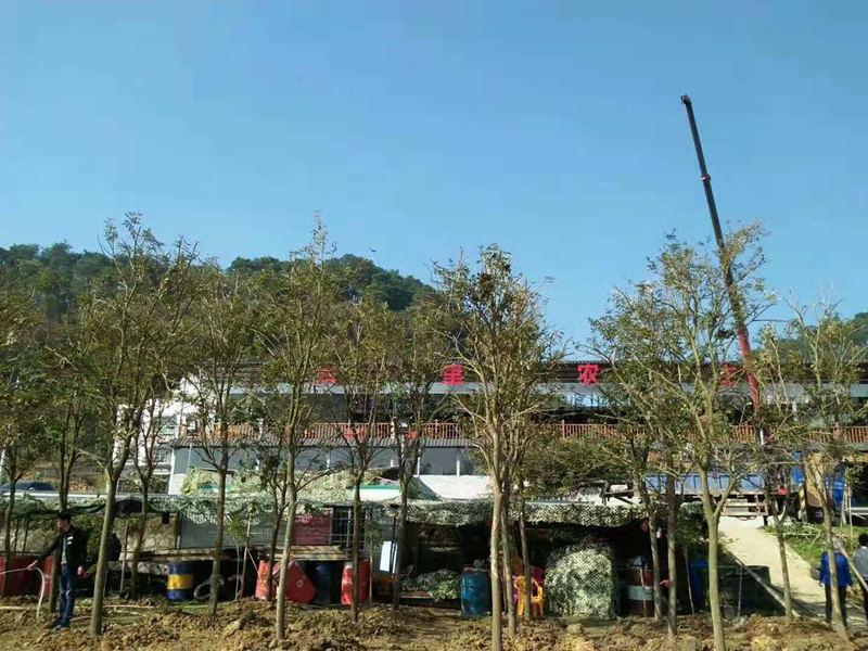 选园林绿化找鸿图园林公司|正规的广西园林绿化工程