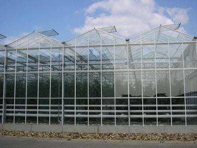 【品质保证】纹络式温室大棚建设|纹络型温室建造商