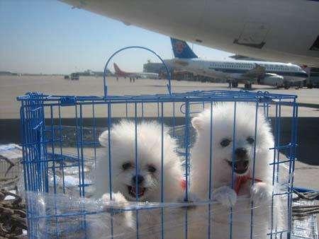 想要重庆宠物空运就找捷利航空货运 宠物托运公司电话