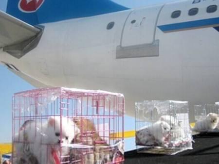 重庆宠物空运找捷利航空货运_宠物托运公司电话