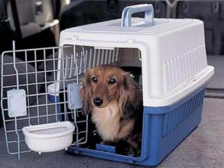 重庆宠物空运找捷利航空货运_效率高-宠物托运公司