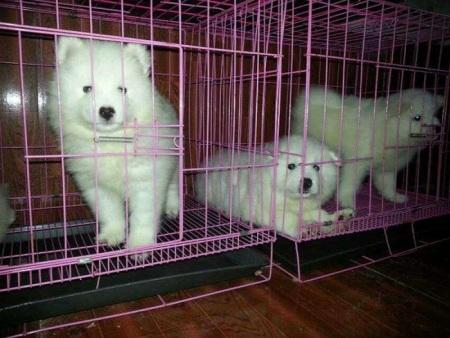 重庆宠物托运公司电话价格_宠物空运
