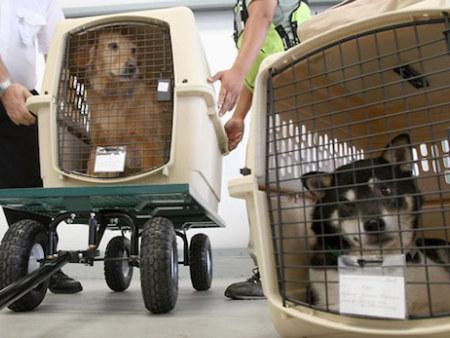 宠物空运,重庆宠物空运哪家公司口碑好