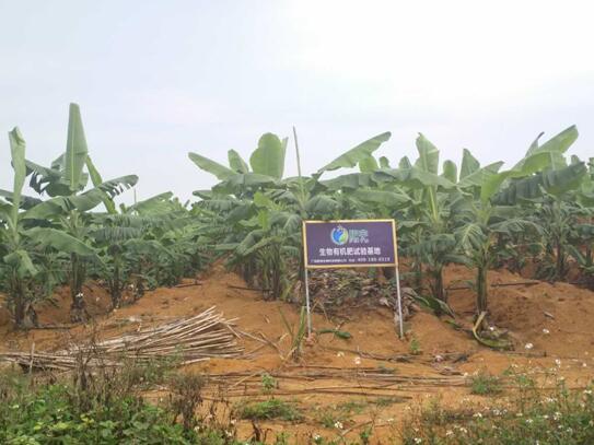 广西有机肥价格_哪里能买到质量好的有机肥